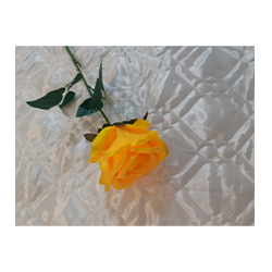 Цветы 12
